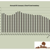 Historical and Projected January 1 Beef Cow Numbers, US.  Sources: USDA-NASS and UGA.