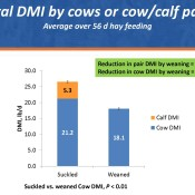 Hay-intake-by-cows-Fig-1