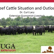 Beef cattle outlook Feb 2015