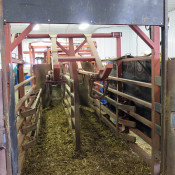 K&D Feedlot double alley