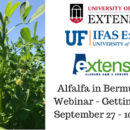 Alfalfa in Bermudagrass Webinar - Getting StartedSeptember 27 - 10 AM CDT