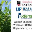 Alfalfa in Bermudagrass Webinar - Getting StartedSeptember 27 - 10 AM CDT